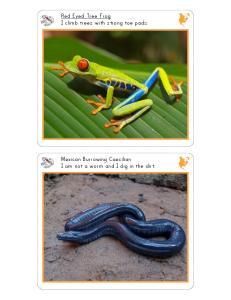 Amphibians Cards