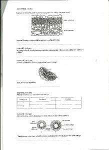 Cytologia i histologia 3