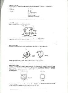 Cytologia i histologia 4