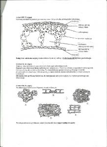 Cytologia i histologia 7
