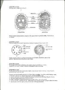 Cytologia i histologia 8
