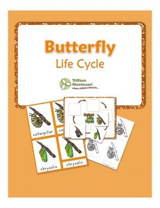Life Cycles- Butterfly by Trillium Montessori