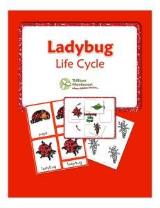 Life Cycles- Ladybug by Trillium Montessori