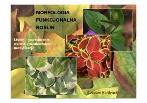 Morfologia fun-10