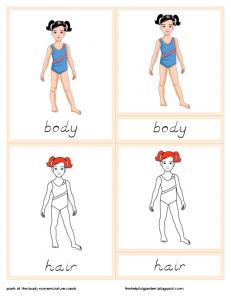 Parts of the Body Nomenclature Cards