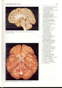 Rochen J.W. Yokochi C. - Anatomia czlowieka. Atlas fotograficzny - Glo