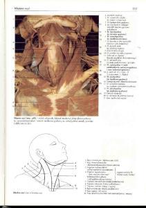 Rochen J.W. Yokochi C. - Anatomia czlowieka. Atlas fotograficzny - Szy