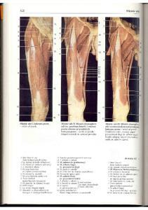Rochen J.W. Yokochi C. - Anatomia czlowieka. Atlas fotograficzny - Kon
