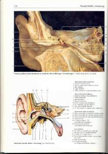Rochen J.W. Yokochi C. - Anatomia czlowieka. Atlas fotograficzny - Uch